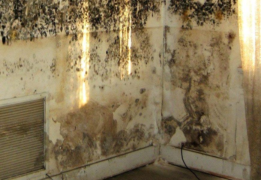 Duvardaki Küf Nasıl Temizlenir ?